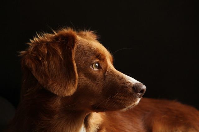 Hnedé šteňa.jpg