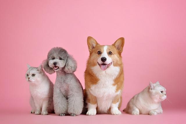 Dvaja psi a dve mačky na ružovom pozadí.jpg