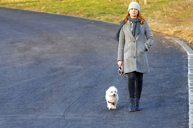 pes na prechádzke.jpg